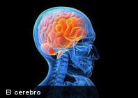 Lo que le ocurre al cerebro durante un orgasmo