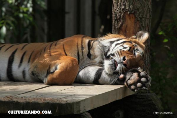 Estos son los más dormilones de la naturaleza