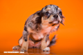 Estas son las 7 emociones básicas que compartimos los animales