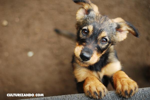 ¿Cuántos años humanos tiene tu perro? Aprende a calcularlo