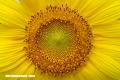 En Imágenes: La espectacular simetría de la naturaleza