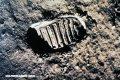 Los caminantes lunares: 12 hombres que pisaron la Luna