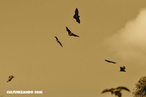 ¿Sabes cuál es el único mamífero capaz de volar?