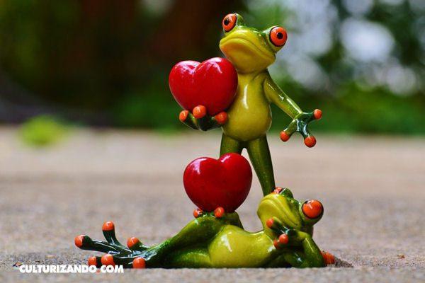 El Amor Se Siente Gracias Al Higado Y No Al Corazon