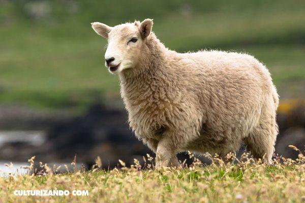 Lo que no sabías sobre la clonación de la oveja Dolly