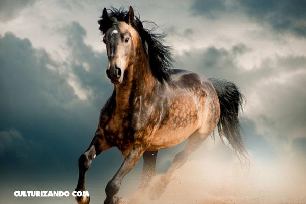 La Nota Curiosa: Los primeros caballos de América