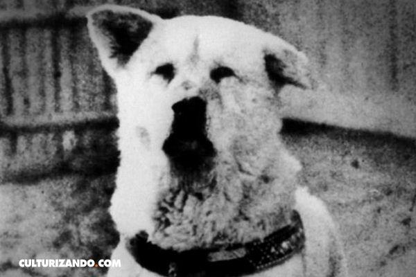 Increíbles historias de lealtad canina: la fidelidad de Hachikō