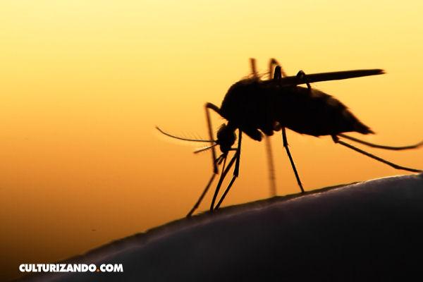 La Nota Curiosa: ¿Cuál es la mejor técnica para matar mosquitos?