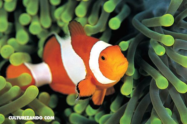 La Nota Curiosa: sobre cómo respiran los peces