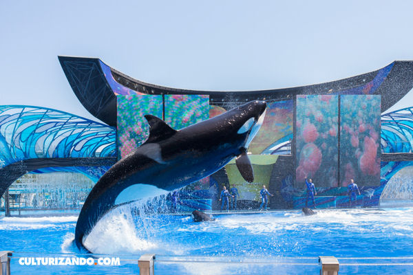 SeaWorld pone fin a cría de orcas