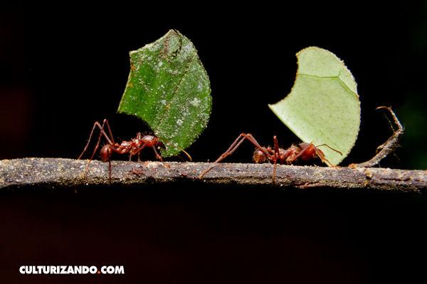 ¿Cómo ahuyentar a las hormigas de tu hogar?
