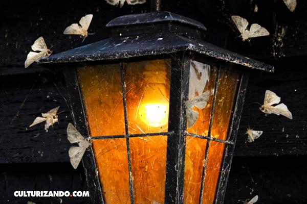 La Nota Curiosa: ¿por qué la luz atrae a los insectos?