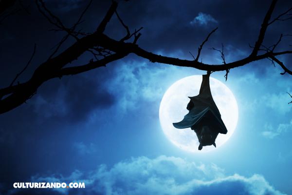 ¿Los murciélagos tienen fobia a la luz de la luna? • La Nota Curiosa