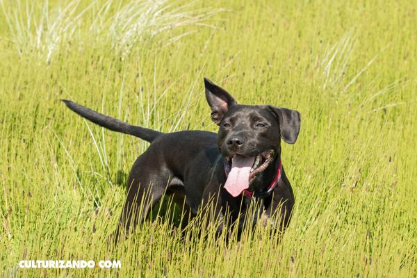 ¿Por qué los perros mueven la cola?