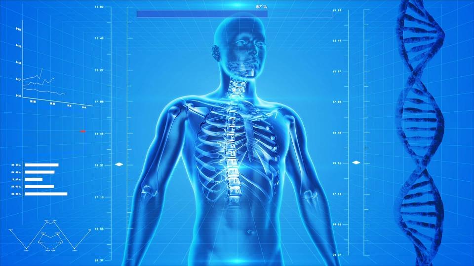 La Nota Curiosa: El músculo más fuerte del cuerpo humano es...