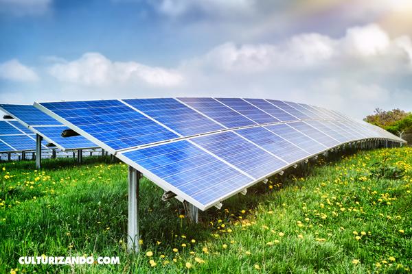 La Nota Curiosa: ¿Sabes lo qué es una granja solar?