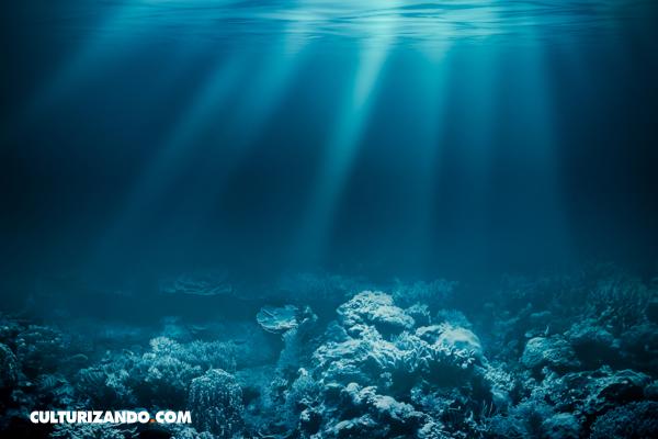En 10 Datos: cómo proteger los océanos desde tu casa