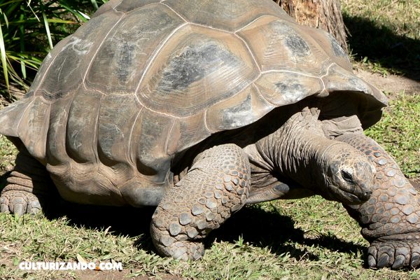 La tortuga Harriet, desde Charles Darwin hasta Steve Irwin
