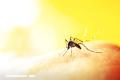 La Nota Curiosa: ¿Cuál es el olor favorito de los mosquitos?