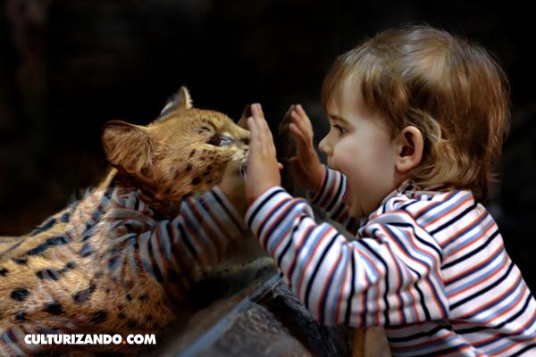 ¿Sabes cuál fue el primer zoológico moderno de la historia?