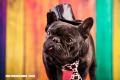 20 curiosidades sobre los perros