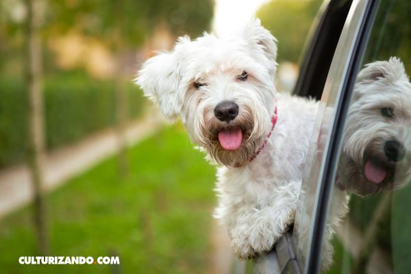5 cosas que no sabías sobre los perros