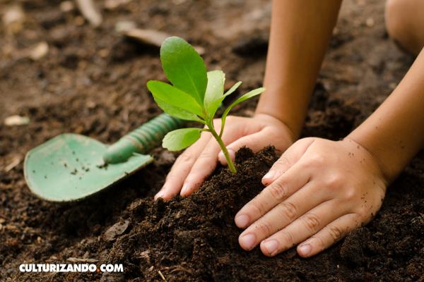 La Nota Curiosa: ¿Por dónde respiran las plantas? (+Video)