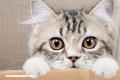 Beneficios de tener un gato de mascota