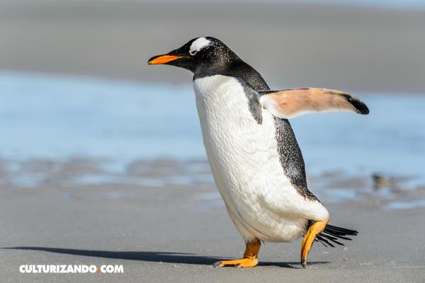 La Nota Curiosa: ¿Por qué los pingüinos no pueden volar?
