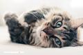 ¿Miedo a los gatos? Quizás sufres de 'Ailurofobia'