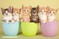 ¿Por qué algunas personas son alérgicas a los gatos?