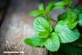 10 beneficios de la hierbabuena que seguramente no conocías