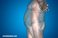 La Nota Curiosa: ¿Por qué algunas personas engordan después de una dieta?