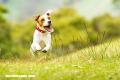 La Nota Curiosa: ¿Por qué tu perro come pasto?