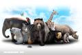 ¡Hoy es el Día Mundial de los Animales!