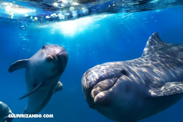 Delfines, perros y elefantes poseen inteligencia tanto o más capaz que la de los primates