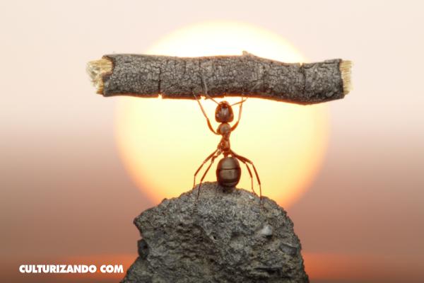 Lo que no sabías sobre las hormigas (+Video)