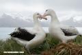 4 de los animales más románticos del mundo