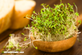 10 beneficios de la alfalfa