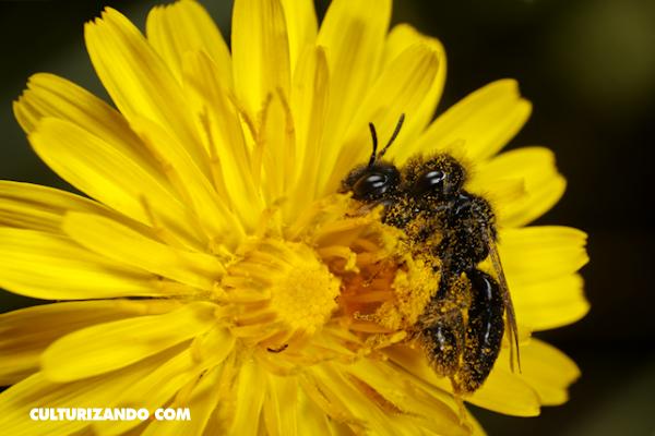 La curiosa vida sexual de las aves y las abejas