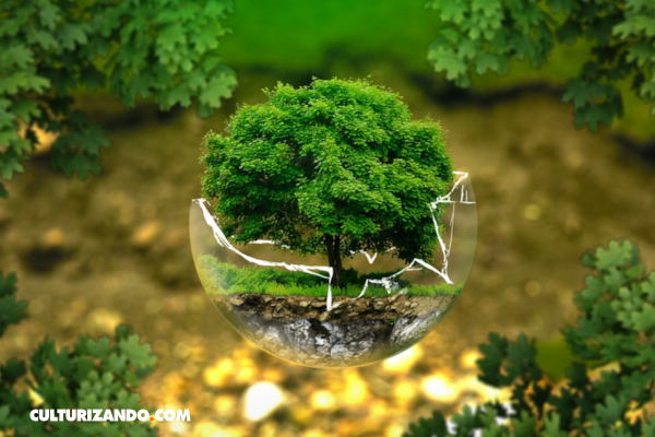 4 hábitos simples que reducirán tu huella ecológica