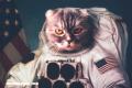 7 famosos animales astronautas