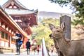 Nara, la ciudad japonesa para los fanáticos de Bambi (+Fotos)