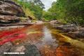 Lugares increíbles: Caño Cristales en Colombia