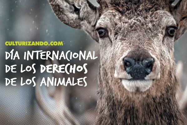A propósito del Día Internacional de los Derechos de los Animales