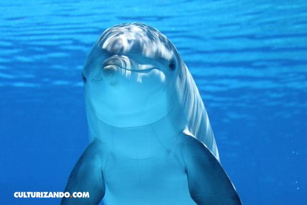 15 Curiosidades Sobre Los Delfines