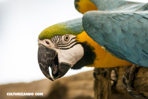 5 curiosidades sobre animales que probablemente desconocías
