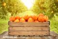 10 beneficios de las naranjas (+Video)