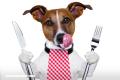 10 alimentos que nunca debes darle a tu mascota