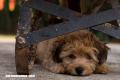 ¿Cómo proteger a tus mascotas del estrés de las fiestas?